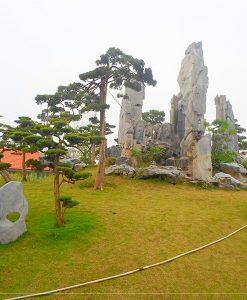doi-tung2