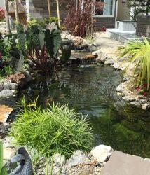 Tại sao nên có hồ cá Koi trong thiết kế sân vườn?